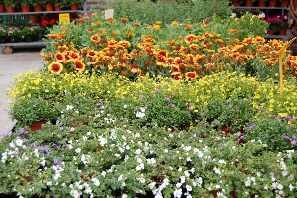 Plantas de exterior - Vivero Collado Villalba