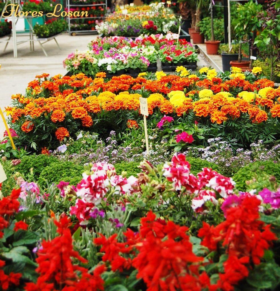 Flores losan florister a vivero en collado villalba for Plantas que hay en un vivero