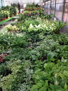Vivero Collado Villalba - Flores y plantas Losan