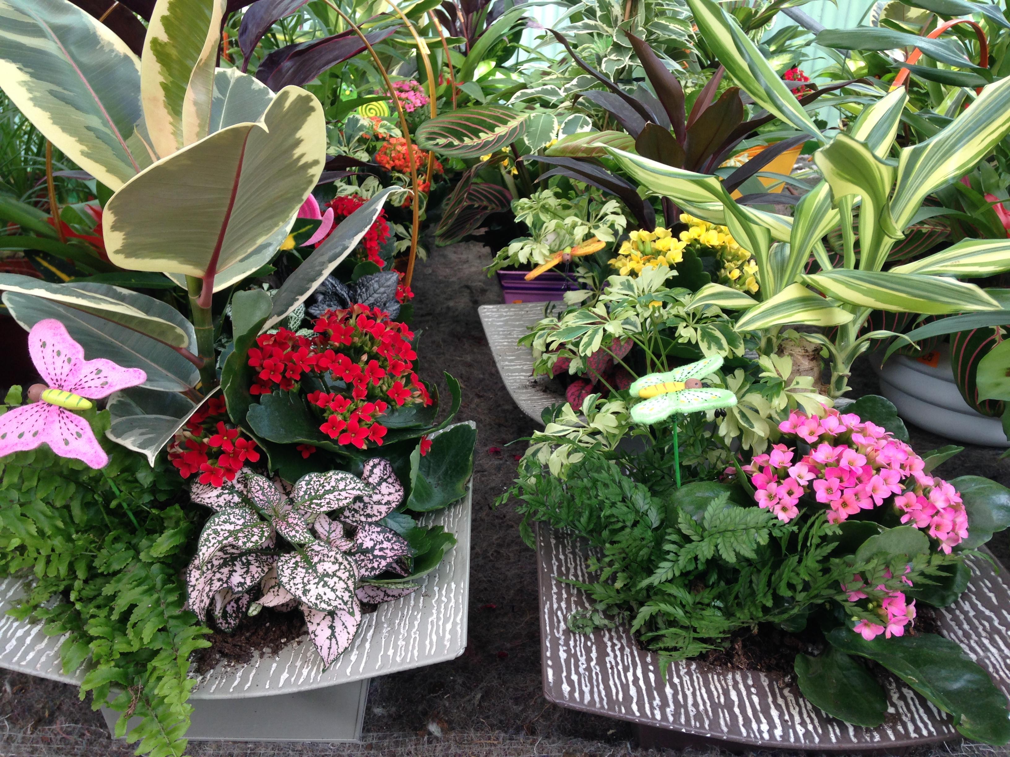 Plantas de interior collado villalba Plantas de interior duras