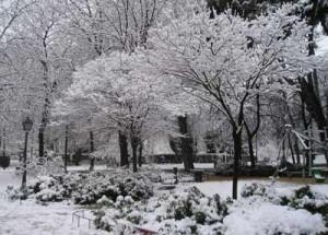 Cuidados del jardín en invierno - Flores Losan
