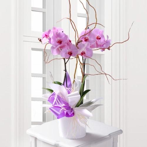 Regalar flores en San Valentín Collado Villalba