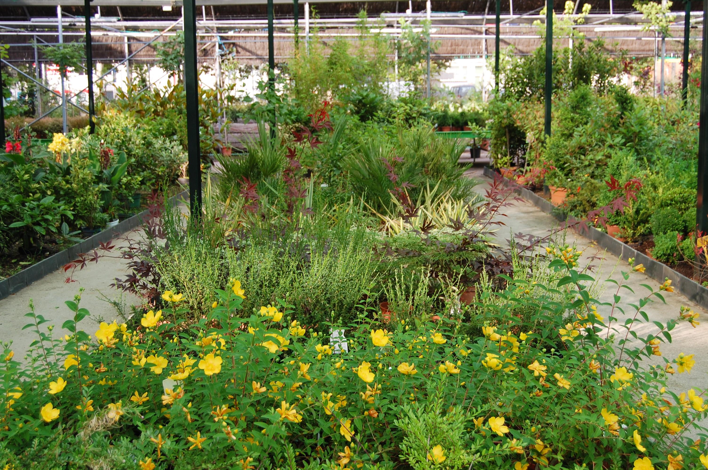 plantas de exterior vivero collado villalba