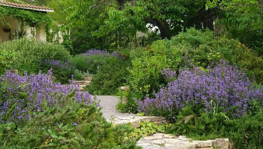 Cinco azules que querrás tener en tu jardín