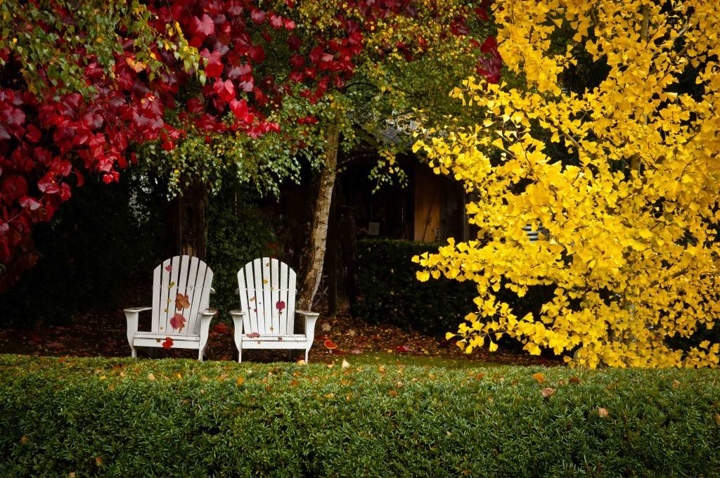 Plantas que embellecen el jardín en otoño