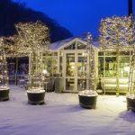 Decoración de tu casa en Navidad con flores y plantas